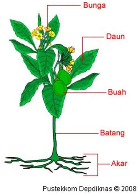 klasifikasi tumbuhan berbiji tumbuhan berbiji  kebun
