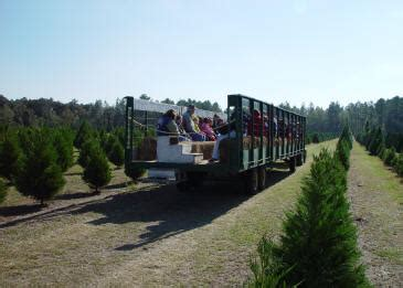 brewer s christmas tree blueberry farm hay rides