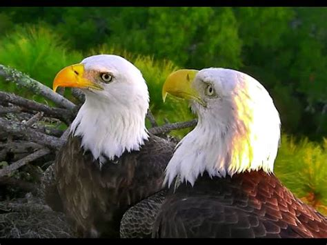 aef nefl eagles 10 26 14 romeo juliet in stunning hd