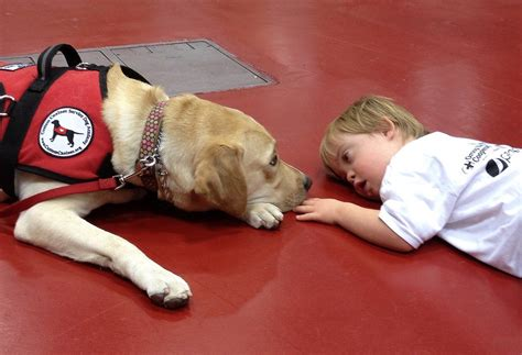 types of service dogs 10 different types of service dogs high octane humor
