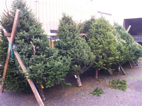gallery of where can i recycle my christmas tree perfect