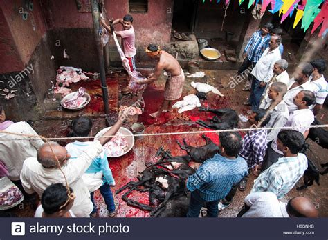 kali worship human sacrifice bodies of sacrificed goats at kali temple kali ghat