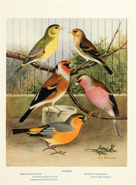 heat l for bird aviary canaries hybrids and british birds in cage and aviary