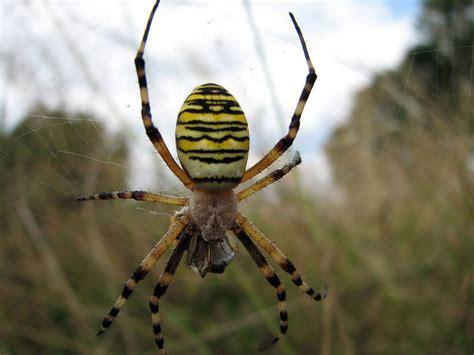 Garden Spider Repellent Original File 1 600 215 1 200 Pixels File Size 166 Kb