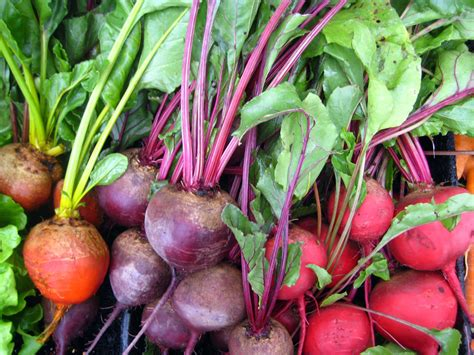 How To Cook Beets From The Garden by Whole Food Thinking And Whole Plant New Roots