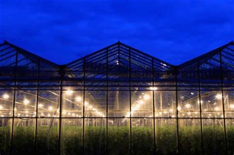 Sle Business Plan Greenhouse | di system starting an aquaponics business plan