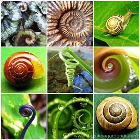 spiral pattern nature 15 benefits of a herb spiral in your garden the micro