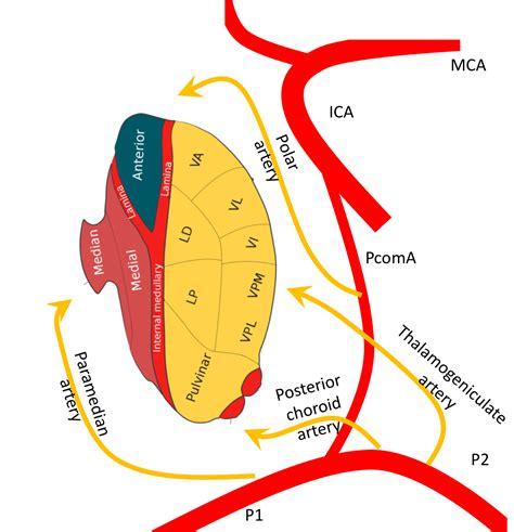best neurology journals the thalamus of secrets neurology journal