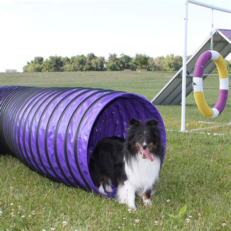 agility tunnel 20 agility tunnels for competition