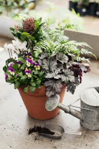 Winter Patio Plants 25 Best Ideas About Winter Container Gardening On