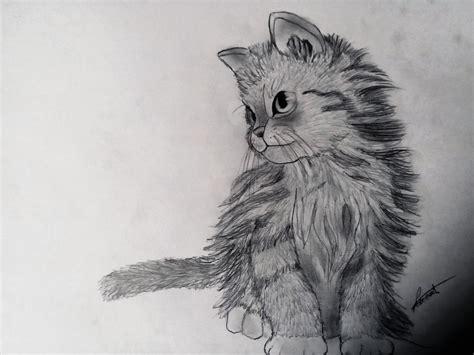 facile it banche comment dessiner un chaton d 233 butant