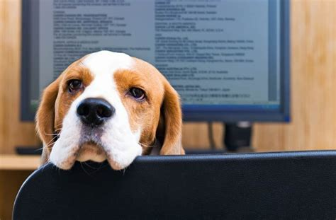 how to working dogs how to bring your to work without landing in the doghouse safebee