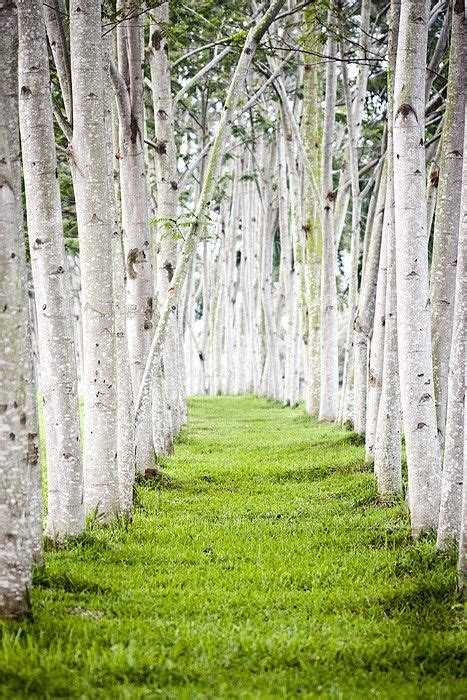 trees pathway landscape beautiful amazing photos and