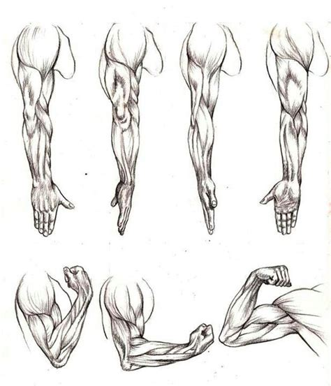 how to draw muscles muscles study human figure
