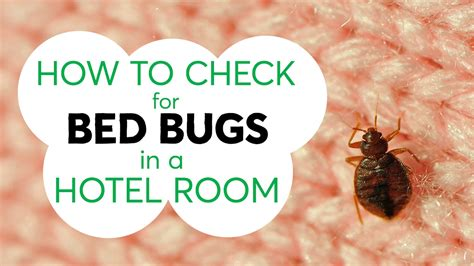 how to test for bed bugs how to check for bed bugs in a hotel room consumer