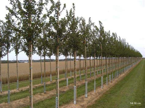 steinfußböden für küche b 195 164 ume f 195 188 r ersatzpflanzung ausgleichspflanzung mr