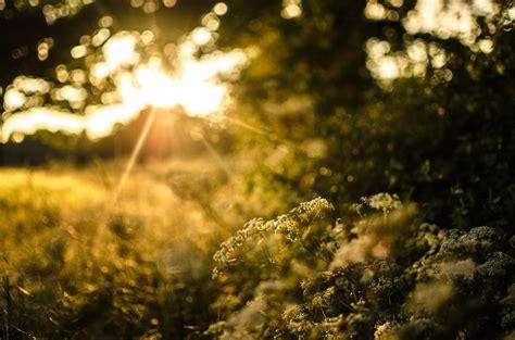 nature grass plants tree bush green sun light sunset night