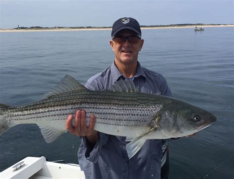 cape cod fishing cape cod bay fishing report may 19 2016 salty cape