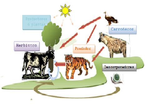 cadena alimenticia jirafa lo que no sabemos de 187 2010 187 noviembre