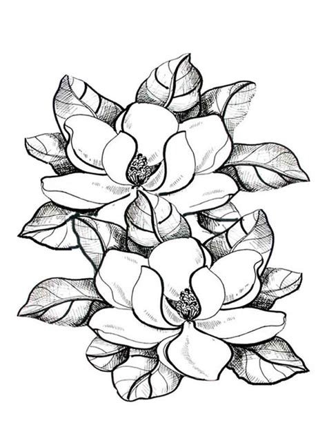 Magnolia Coloring Pages And Print Magnolia
