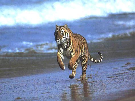 wwwthatach thata jungle animalorama