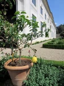 giardino di boboli pianta la limonaia giardino di boboli firenze notizie