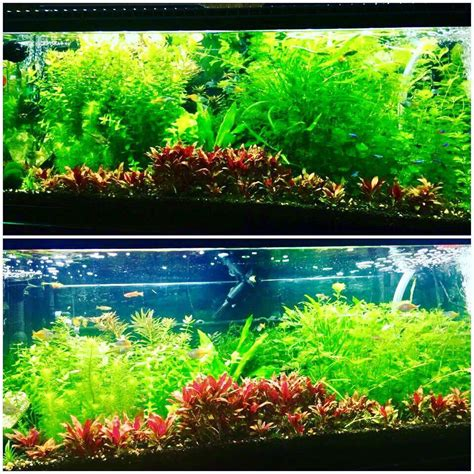 are led lights for planted aquariums pur pas par in aquarium reef planted lighting led
