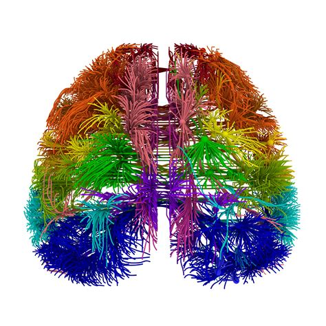 wiring diagram of mouse brain created d brief