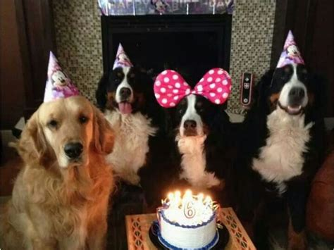 newfie birthday meme   happy birthday dog meme ideas