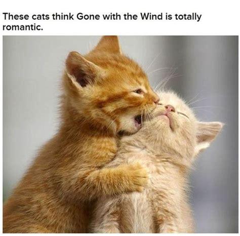 imagenes romanticas de gatos funny cats that look like movie characters 30 pics