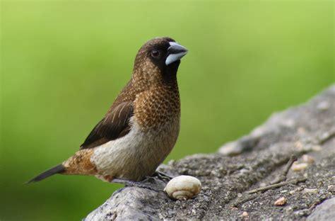 bengalim do jap 227 o place of birds