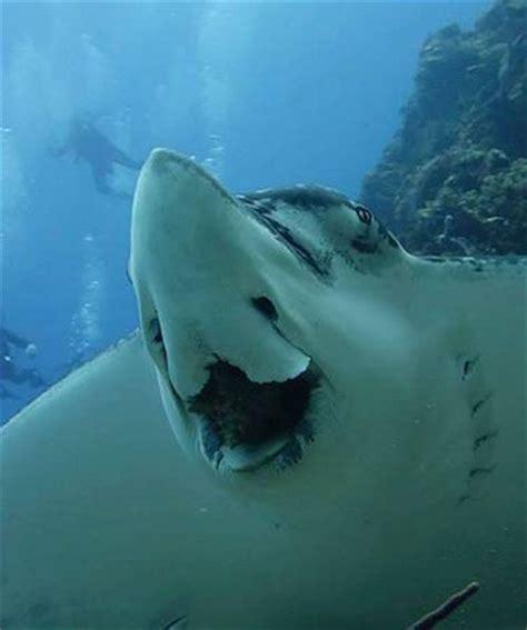 dive in scuba scuba diving in punta cana with dressel divers