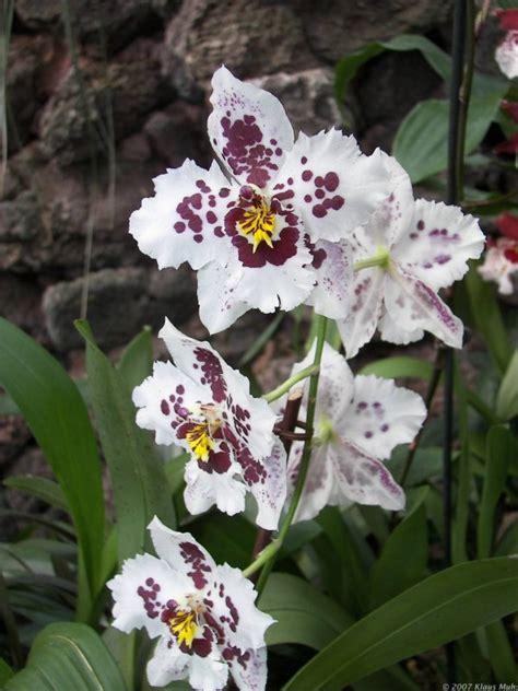 orchideen ausstellung im botanischen garten rombergpark - Garten 06 Dortmund