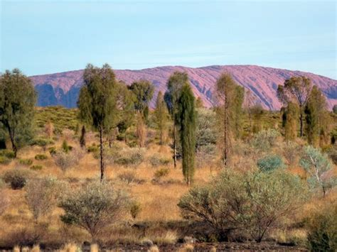 View From Our Room Desert Gardens Ayers Rock