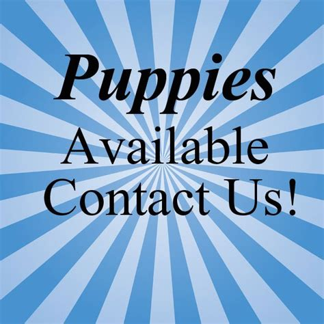 Bumpers Play House Dog Grooming Burlington Wi | playmate kennels and stables pet boarding union grove wi