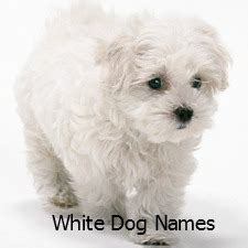 names for white dogs cafechoo image boy puppy names for small dogs