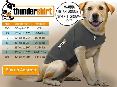 thunder shirts for dogs all about the thundershirt for dogs