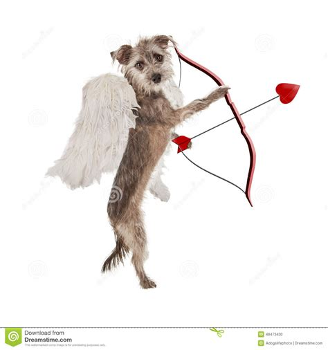 cupid s dogs valentines day cupid stock photo image of 48473430