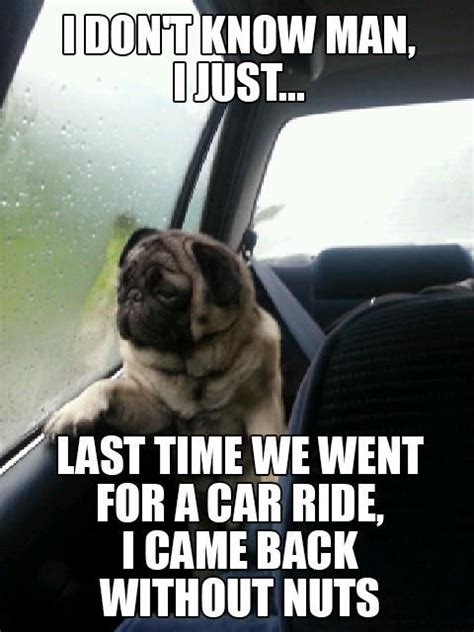 Funny Pug Memes - the funniest of the introspective pug meme 12 pics