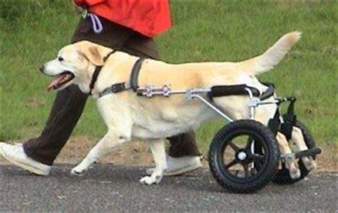 sedia a rotelle per cani pecore a rotelle animal mouse repubblica it