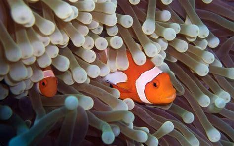 anemone eating bird what do clownfish eat joy of animals