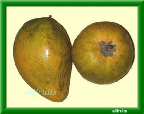 a fruit that starts with e fruits in the world fruits name starts with the letter quot e