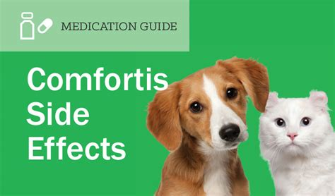 carprofen for dogs side effects comfortis side effects