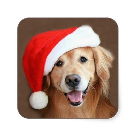 golden retriever hat golden retriever with santa hat
