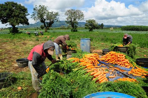 imagenes agricultura maya aumento na produ 231 227 o agr 237 cola mundial n 227 o 233 sin 244 nimo de