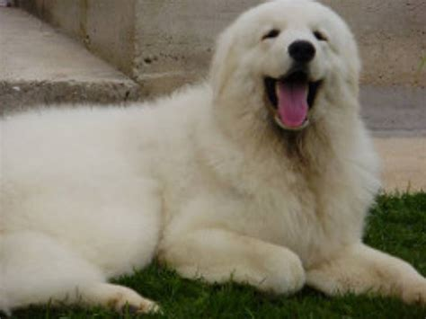most loyal breed 20 most loyal breeds you can find wildlife insider