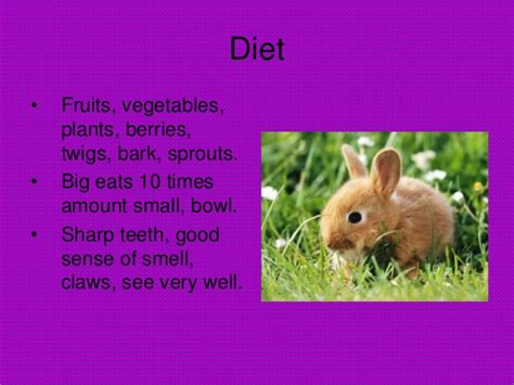 7 Facts On Bunny Rabbits by Rabbit