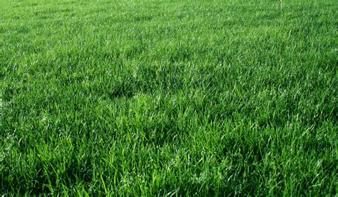 vray sketchup grass tutorial sketchup texture tutorial vray for sketchup night scene 3