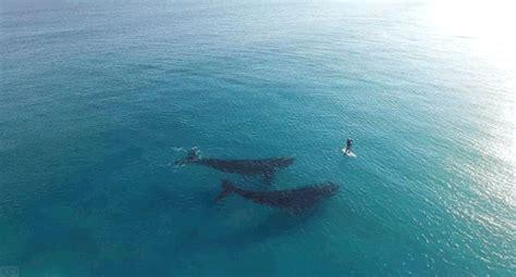 wale gif whales ocean life tumblr
