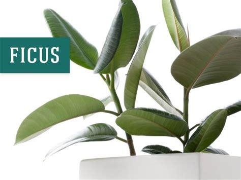 best indoor flower plants 26 best indoor plants for your home